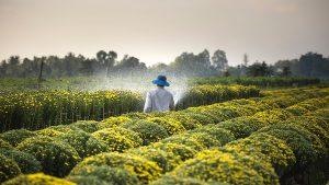 農薬 農業 肥料
