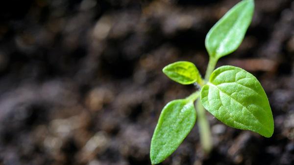 有機肥料製造用 遠心分離機